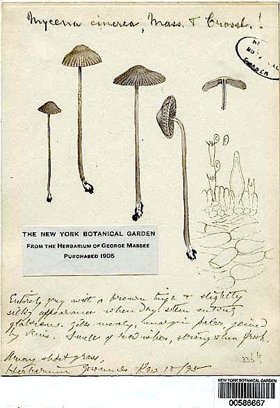 nfromn-mushrooms