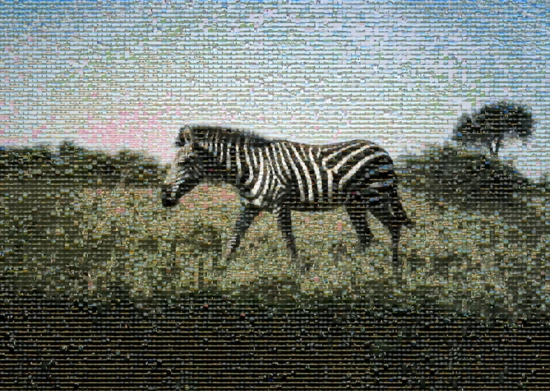 zebra-mosaic-copy