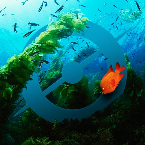 avatar_kelp