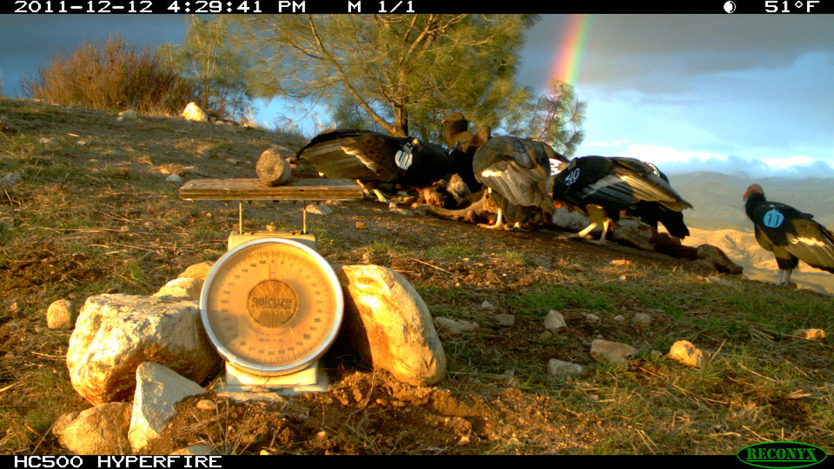 Whats Really At The End Of The Rainbow Daily Zooniverse