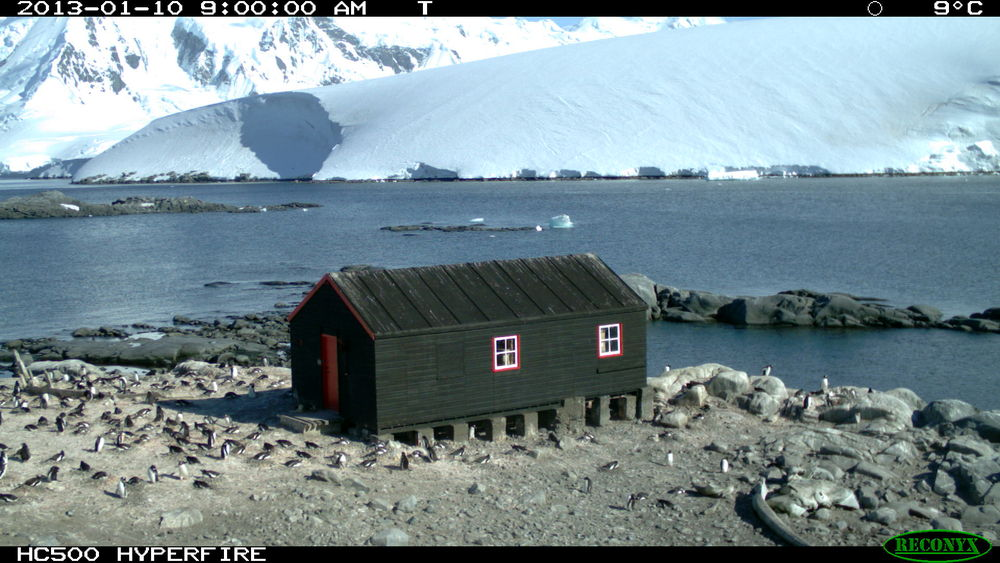 Penguin post office daily zooniverse for Port lockroy