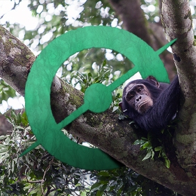 avatar_chimps