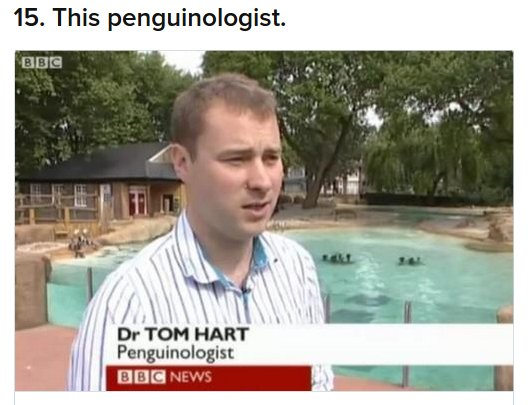 tom-penguinologist