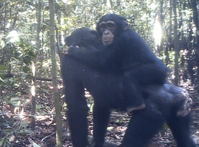Screen Shot 2015-07-16 at 5.02.14 AM
