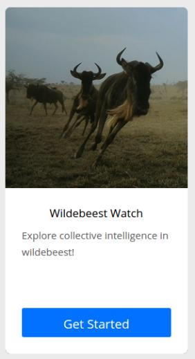 wildebeest-watch