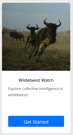 wildebeest-watch