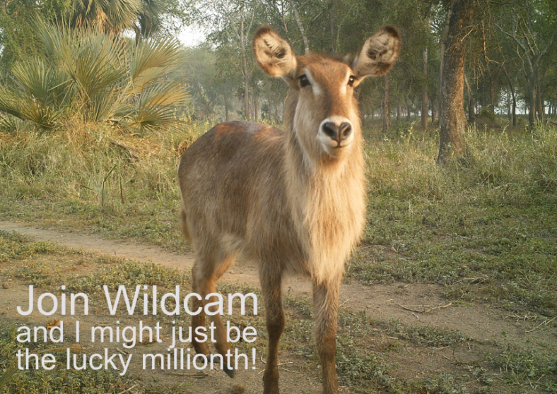 wildcam-million