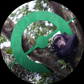 chimps-circle