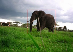 Example aggregation of volunteer classifications from Computer Vision: Serengeti