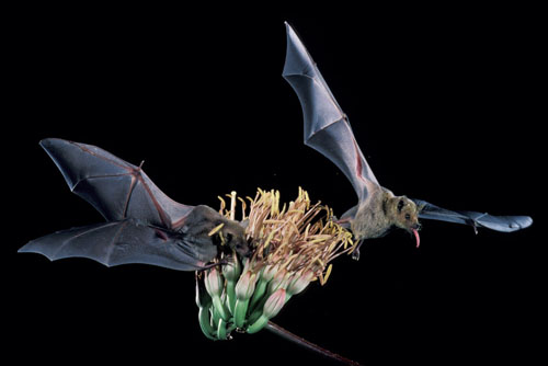 bats.jpeg
