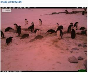 Penguins on Mars