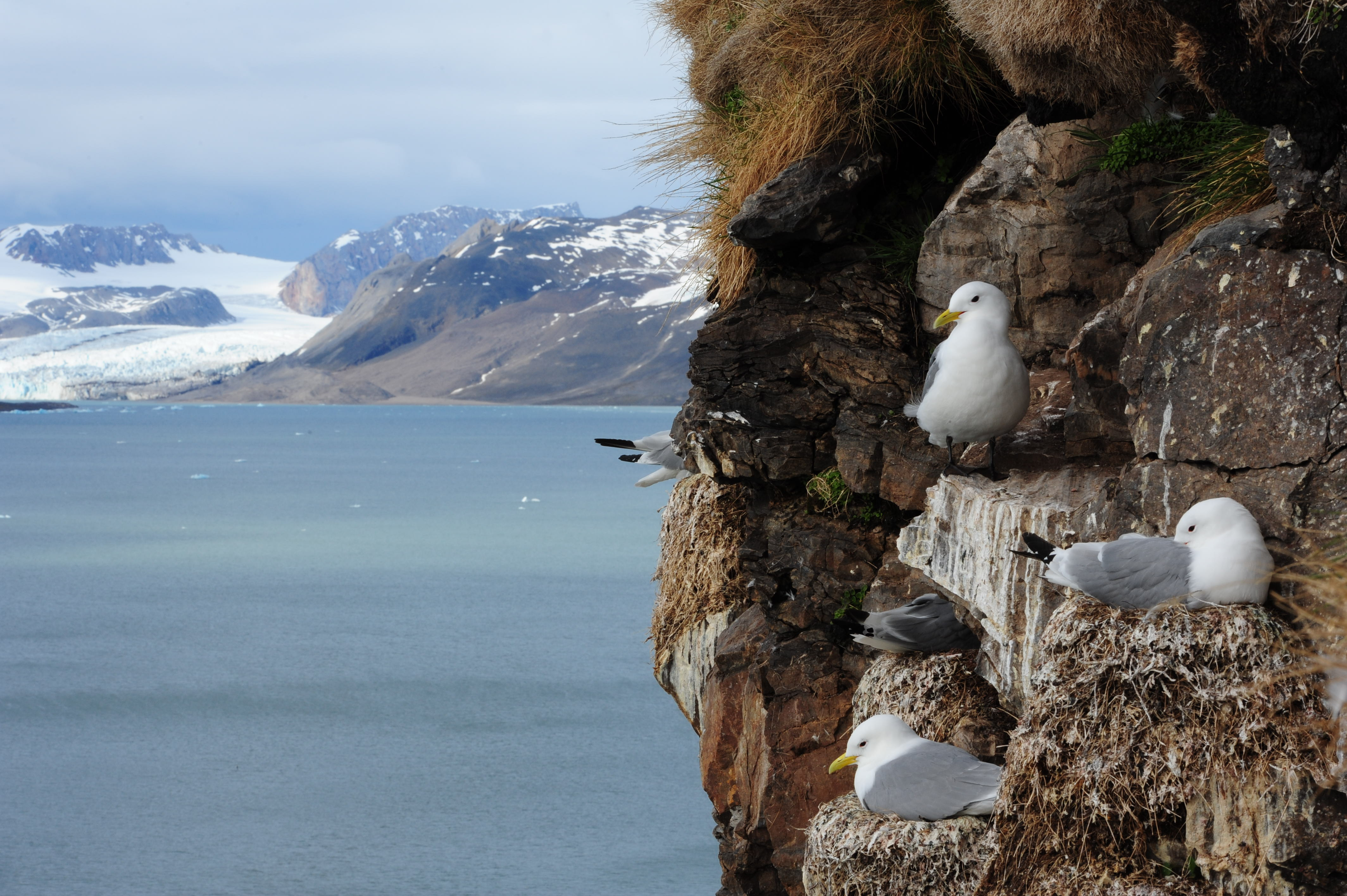 welcome to seabird watch daily zooniverse