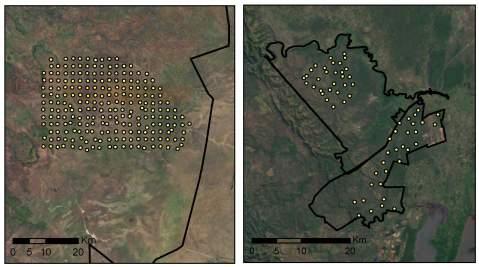 Camera surveys (yellow dot = camera) in Serengeti, Tanzania (left) and Phinda/Mkhuze, South Africa (right).